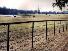 Pipe fencing is an extremely durable and versatile fencing system that provides years of trouble free service. With over 30 years installing pipe fences and corral systems in southwest MO Pasture Fencing, Ranch Fencing, Horse Fencing, Farm Fence, Horse Shelter, Horse Stables, Horse Barns, Front Yard Fence, Fence Gate