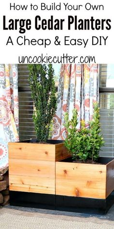 Large Cedars DIY Pla