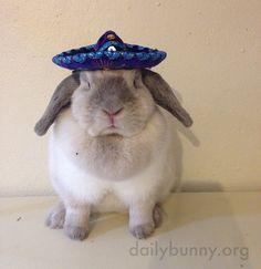 Bunny can rock a tiny sombrero - March 25, 2015