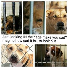 Does it make you sad to look in? Imagine how sad it feels to look out through the bars. Help, if you can. Please.