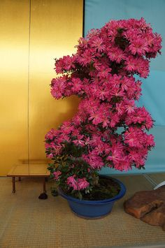 Blooming bonsai | Flickr: partage de photos!