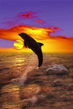 * * DOLPHIN, IT WAS FROM YOUR MARINE CARESS,  THAT I LEARNED TENDERNESS.           ~ Songs of the Sea
