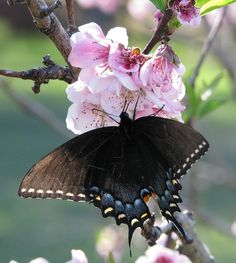 Spring Butterfly 2011