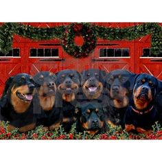 Merry Rotties! Blessed Christmas!