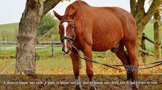 Je plains un homme sans vache, je plains un homme sans âne, mais un homme sans cheval aura du mal à rester sur terre.