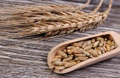 Rye: Health Benefits, Side Effects, Fun Facts, Nutrition Facts and History