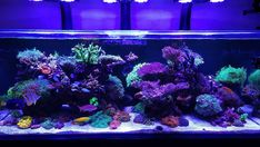 "Phillip Tennell on Instagram: ""Full tank shot.  Samsung S20 ultra no filter. Update fixed focus issue. Test"" Saltwater Tank, Saltwater Aquarium, Aquarium Fish Tank, Fish Tanks, Filters, Samsung, Ocean, Living Room, Instagram"