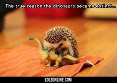 The True Reasons Dinosaurs Went Extinct... #lol #haha #funny