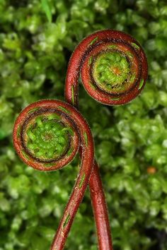 Two Spirals by backpackphotography, via Flickr