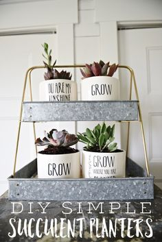 DIY succulent plante