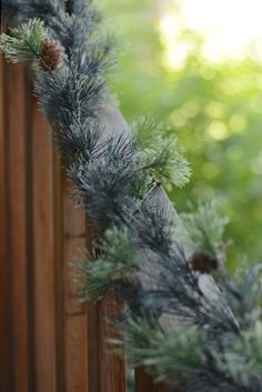 9 FT Mt Ming Cashmere Pine Garland