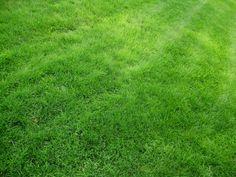 Green-Grass-field-4k-desktop-widescreen-wallpaper.jpg (3264×2448)