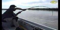 Pesca un enorme pesce Siluro