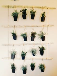 hanging plants.. this is kind of cool! #DIY