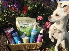 Enter to win a $70 prize pack of @InnovetPet1 first aid products for your dog! 2 winners: http://www.dogtipper.com/giveaways-contests/2016/04/win-an-innovet-prize-pack.html