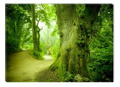Startonight Canvas Wall Art Fresh green the forest Trees USA Design for Home Decor Dual View Surprise Artwork Modern Framed Ready to Hang Wall Art 315 X 472 Inch 100 Original Art Painting * Read more at the image link. (This is an affiliate link)