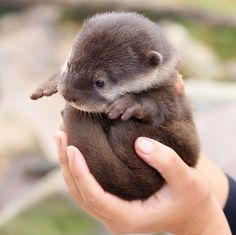 This has got to at the very least make you smike. Baby otter!