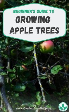 How To Grow Apple Trees (Gardening Guide) # Garden Trees, Garden Plants, Planting A Garden, Fruit Tree Garden, Balcony Garden, Vegetable Garden, Gardening For Beginners, Gardening Tips, Growing Apple Trees