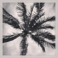 aubrieoliverfromnyc.tumblr.com #southbeach, #miami, #florida, #palmtrees