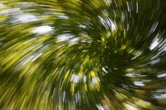Zoom burst of trees by kredn
