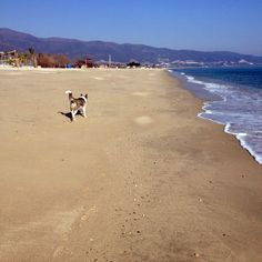 Thessaloniki, Play, Beach, Water, Dogs, Outdoor, Gripe Water, Outdoors, The Beach