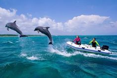 Bottlenose dolphins jumping over water next to boat,Freeport,Bahamas - Stephen Frink/The Image Bank/Getty Images