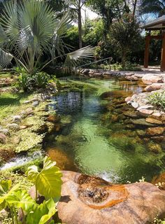 Beautiful backyard pond