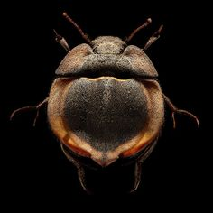 Microsculpture: Insect Portraits Under The Microscope by Levon Biss #inspiration #photography