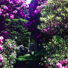 Garden Delight http://markdsikes.com/2014/04/23/garden-delight/