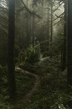 Misty forest at Silverton falls area, Oregon Misty Forest, Forest Fairy, Dark Forest, Night Forest, Forest Color, Foggy Forest, Forest Road, Magical Forest, Dark Green Aesthetic