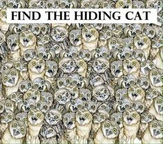 Can you find hidden cat in this pic? There is a cat hiding between these owls. Can you spot the cat? On first instance, it may look a little difficult to spot it, but when you Owl Pictures, Hidden Pictures, Best Funny Pictures, Crazy Cat Lady, Crazy Cats, Ache O Gato, Find The Hidden Objects, Brain Teasers Riddles, Can You Find It