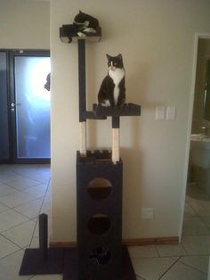 Cat Castle, Cat Post, Cat Tree, Cats U0026 Kittens   Classic Cat Castle