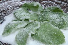Menthe Mint Recipes, Cabbage, Vegetables, Eat, Ethnic Recipes, Desserts, Google Search, Design, Mint Bouquet