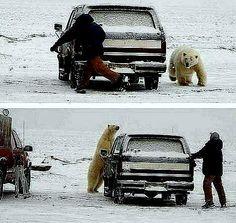 OĞUZ TOPOĞLU : oğlum bak kaçma sadece konuşucaz kutup ayısı ve şö...