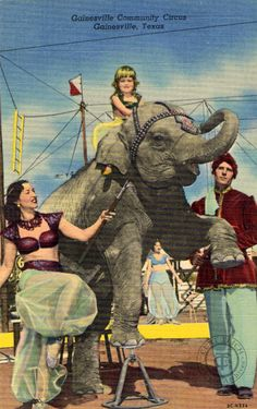 The Curt Teich Postcard Blog: Pachyderms on Postcards