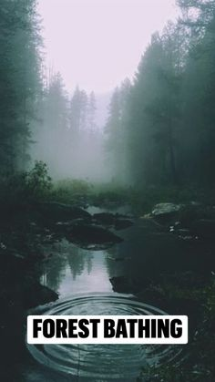 Guide to Forest Bathing