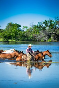 Love this image of a woman and her horses. Western Riding, Trail Riding, Western Art, Western Cowboy, Western Quotes, Cowgirl And Horse, Cowboy Art, Horse Love, Rodeo Cowboys