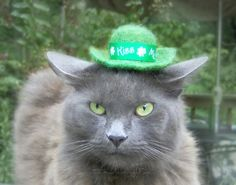 Cat Hat for Saint Patrick's Day by ToScarboroughFair on Etsy, $26.00