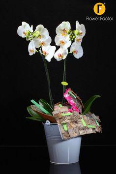 Opti-Grandi #Creation #Phalaenopsis #Orchids