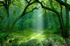 森林景観自然日光の木