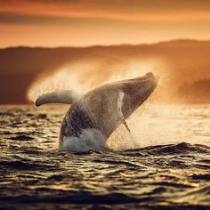 Follow our weekend countdown to the big reveal of the 2015 Traveler Photo Contest winners announcement LIVE! on @CBSThisMorning on Monday Aug. 3. Visit http://ift.tt/1FblQaG to check out this year's amazing entries.  Photograph taken in Newfoundland and Labrador Canada by David Howells by natgeotravel