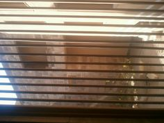 AUC Blinds, Curtains, Home Decor, Sunroom Blinds, Insulated Curtains, Homemade Home Decor, Draping, Decoration Home, Shutters