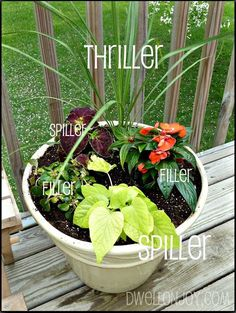 Tips for Beautiful Containers: Thrillers - plants with height, Spillers - plants that spill over the edge of the pot and Fillers - plants that fill in the gap!!
