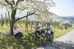 Mehrere Radtouren, die alle perfekt beschildert sind, laden Sie ein, die Region auf dem Rad zu erkunden! #Badradkersburg #Radregion #Natur #Urlaub   (c) pixelmaker.at, Region Bad Radkersburg