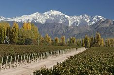 Fly from Buenos Aires to Mendoza for a mountains and wine adventure! Just hours away by air, the town of Mendoza provides easy access to wineries in the region and to Aconcagua Provincial Park. Last one known for its awesome mountain view Mendoza, Montego Bay, Resorts, Patagonia, Malbec, Spring Break Trips, Argentina Travel, Travel And Leisure, Weekend Getaways