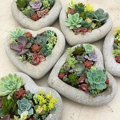 Que seu final de sexta-feira seja ótimo! Regrann from We are so excited Come visit us at Square One Shopping Centre (near Holt Renfrew) tomorrow Friday Saturday and Sunday to pick up a unique Mother's Day gift.Hebel blocks - How cute are these succ Succulent Arrangements, Cacti And Succulents, Planting Succulents, Planting Flowers, Succulent Landscaping, Succulent Gardening, Container Gardening, Succulent Planter Diy, Gardening Books