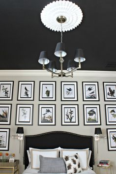 Guest room with black ceiling and white ceiling medallion from Pretty Practical Home.
