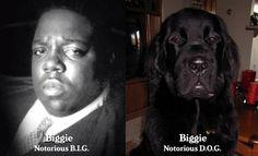Biggie and Biggie by leslie h, via Flickr