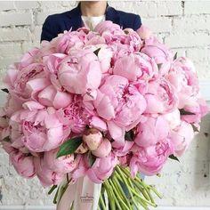 A gorgeous bouquet of pink peonies. Ranunculus Wedding Bouquet, Peonies Bouquet, Pink Peonies, Wedding Bouquets, Wedding Flowers, Beautiful Flower Arrangements, Fresh Flowers, Pink Flowers, Floral Arrangements