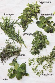herbs • via Pratos e Travessas by Monica Pinto